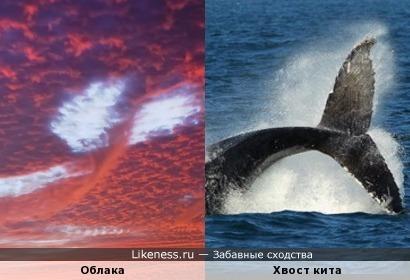 """Силуэт в небе похож на хвост кита (""""ВОЛЬНИЦА"""")"""