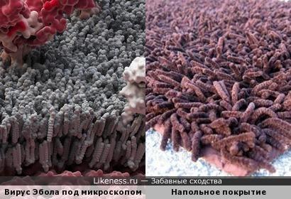 Вирус Эбола под микроскопом и напольное покрытие