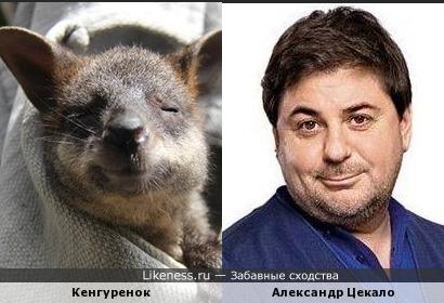 Кенгуренок и Александр Цекало