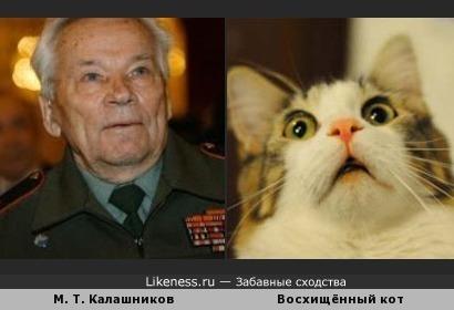 Калашников и кот