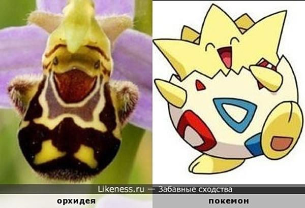Повеселимся ) Орхидея и покемон