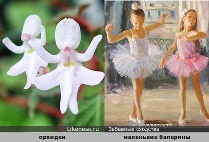 Потанцуем ) Маленькие балерины и орхидеи