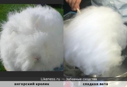 Ангорский кролик напоминает сладкую вату