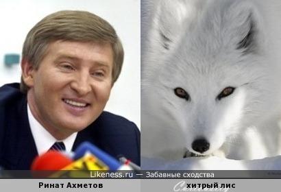 Ринат Ахметов похож на хитрого лиса (почему белого, потому, что блондин)