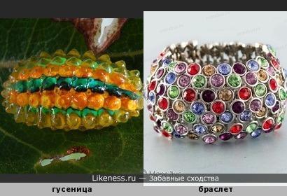 Гусеница похожа на браслет