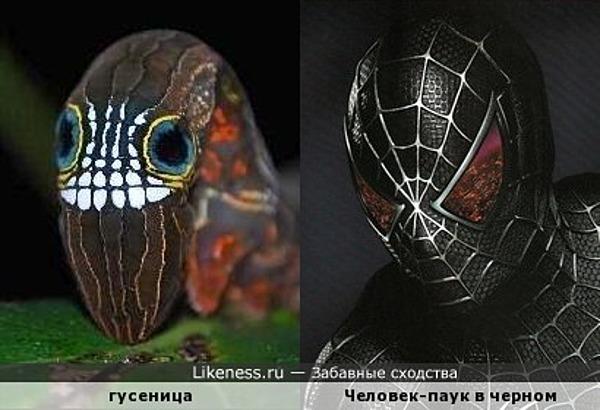 Есть похожая гусеница и на Человека-паука в черном