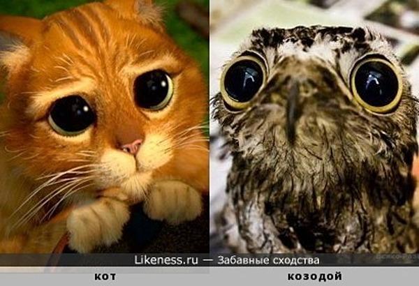 Глазоньки... ми-ми-ми... )) Котик и козодой