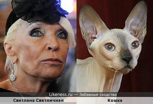 Светличная похожа на кошку (донской сфинкс)