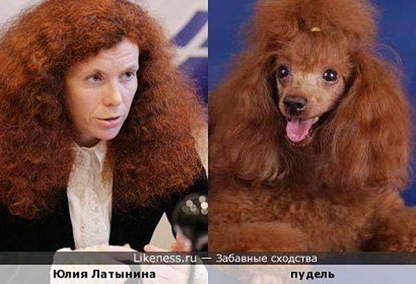 Юлия Латынина похожа на пуделя