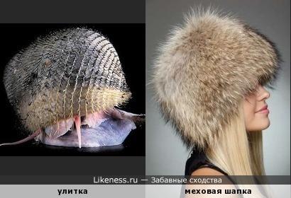 Креативный домик или Улитка в меховой шапке )
