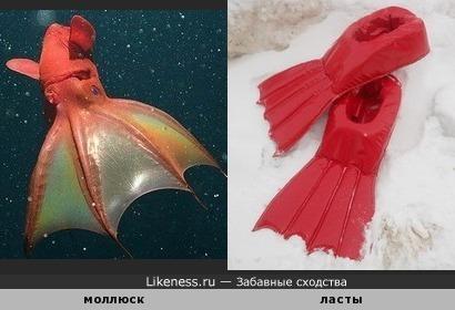 Моллюск Адский вампир похож на ласты