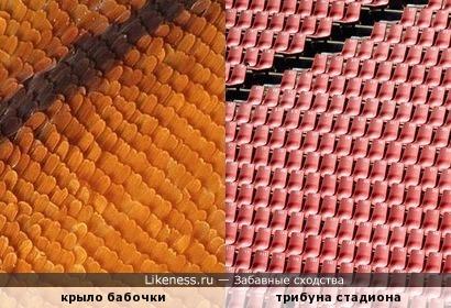 Крыло бабочки под микроскопом напоминает трибуну стадиона