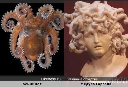 Осьминог с острова Ящериц похож на голову Медузы Горгоны