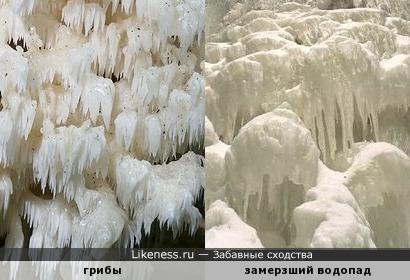 Грибы похожи на замерзший водопад