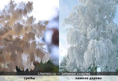 грибы напоминают зимнее дерево