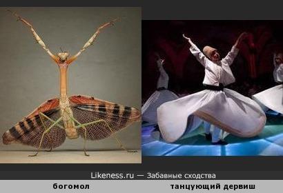 Богомол похож на танцующего дервиша