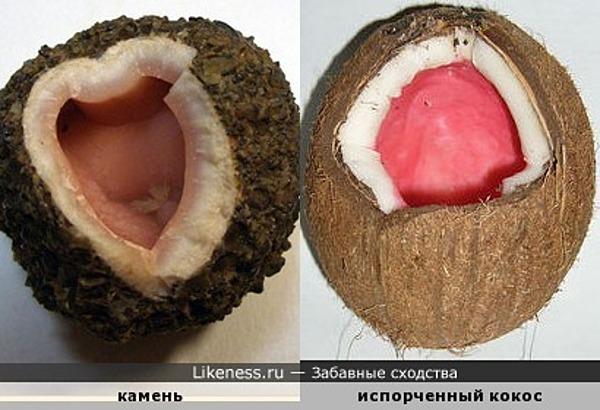 Камень похож на испорченный кокосовый орех