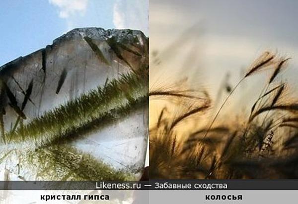 Не фотошоп! Природный кристалл гипса с вкраплениями, похожими на пейзаж с травой и колосьями