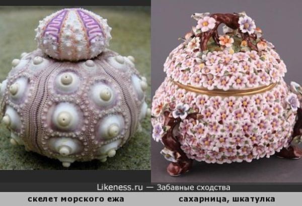 Скелет морского ежа напоминает керамическую шкатулку или сахарницу
