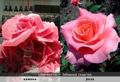 Камень похож на розу