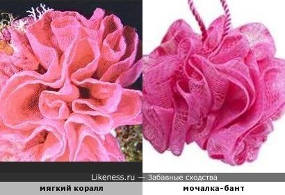 Мягкий коралл похож на гламурный бантик для душа
