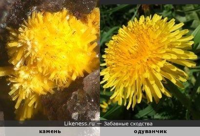 Каменные одуванчики )