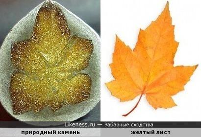 Желтый лис осенний кружит в небесах...