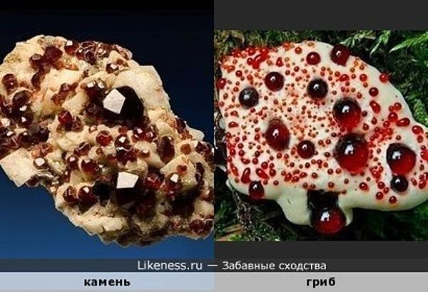 Камень (спессартин на полевом шпате) напоминает гриб Дьявольский зуб