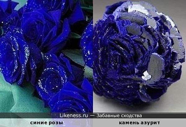 Синие розы похожи на азурит