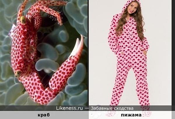 Краб напомнил пижаму