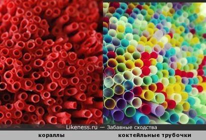 Кораллы похожи на трубочки для коктейля