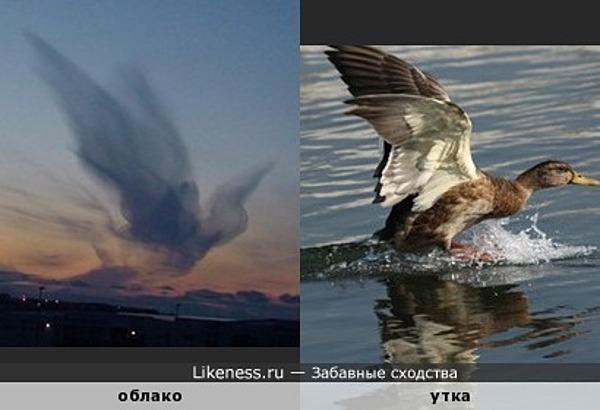 Облако похоже на взлетающую утку