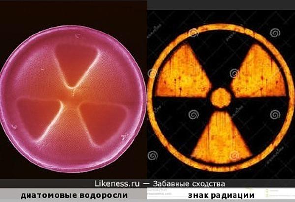 Панцирь диатомовых водорслей похож на знак радиации