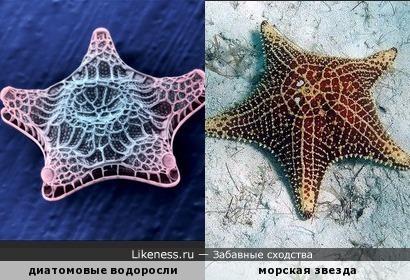 Похожие морские организмы
