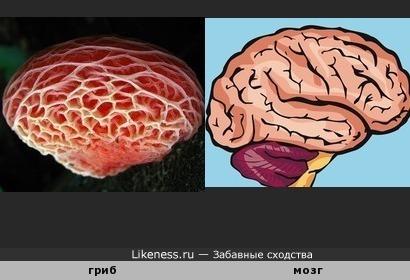 Гриб напоминает мозг