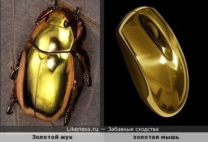 Настоящий Золотой жук (Chrysina aurigans) и золотая компьютерная мышь