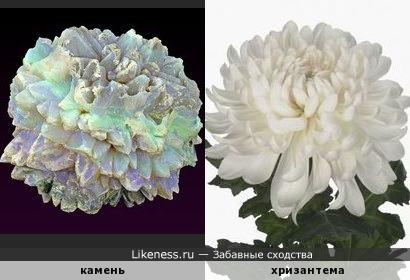 И снова каменный цветок
