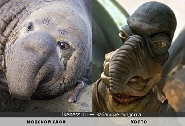 Этот морской слон похож на Уотто
