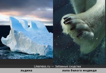 Лапа ледяного медведя