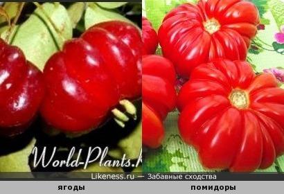 Ягоды и помидоры. Веселый урожай )