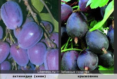 Фиолетовое настроение )