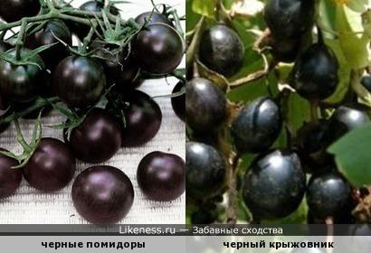 Черный цвет у растений теперь в тренде
