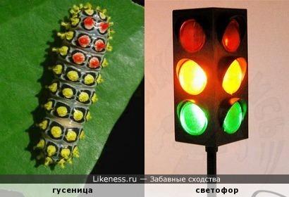 Узор на гусенице напоминает светофор