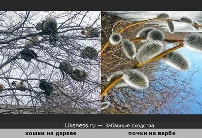 Весна пришла - верба зацвела )