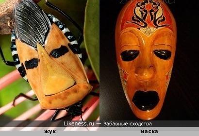 Узор на спинке жука напоминает маску