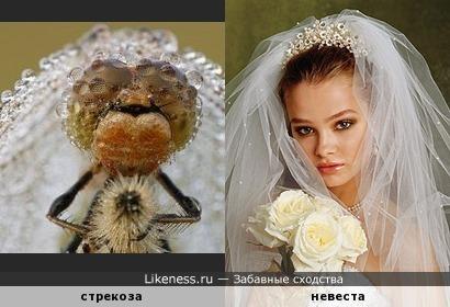 Веселится народ - стрекоза замуж идет! )