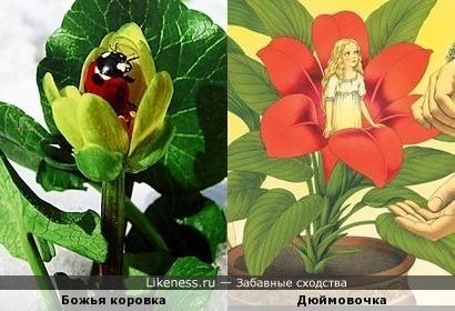 Дюймокоровочка ))