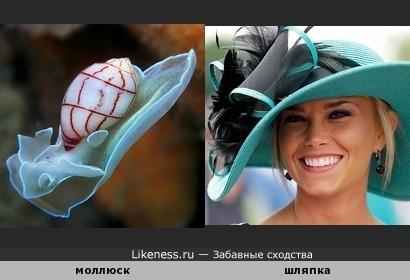 Моллюск похож на пляжную шляпку
