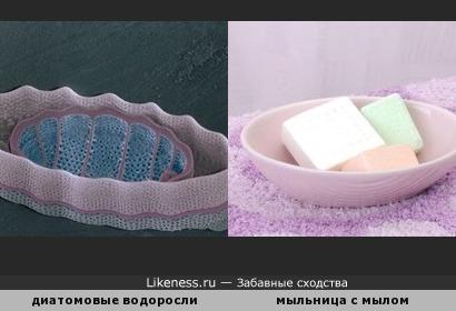 Диатомовые водоросли похожи на мыльницу с мылом )