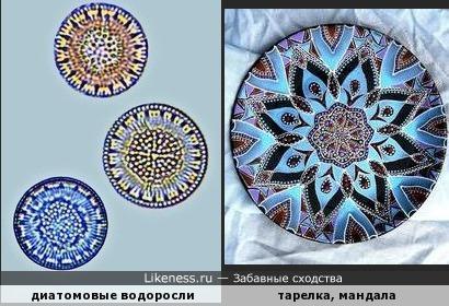 Диатомовые водоросли похожи на мандалы или тарелки с точечной росписью